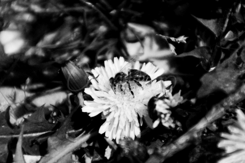 10_mai_2011